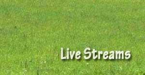 live-streams